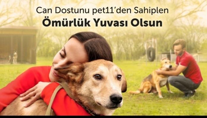 pet11 Kadıköy Belediyesi Hayvan Bakımevi iş Birliği