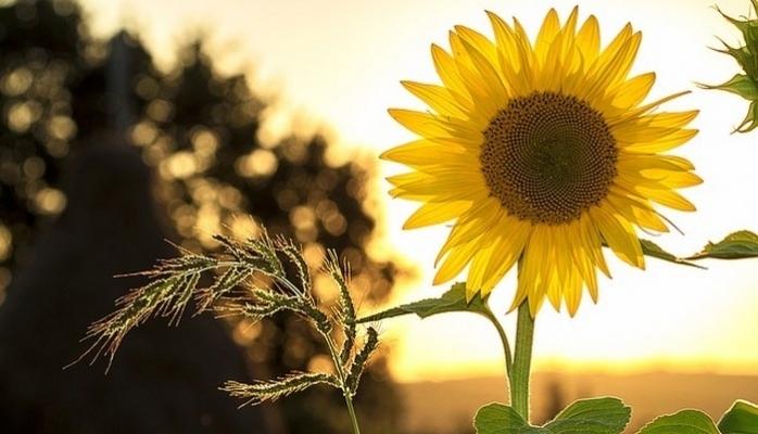 Bitki Koruma Ürünleri Bayilik ve Toptancılık Sınavı 11 Nisan'da Yapılacak