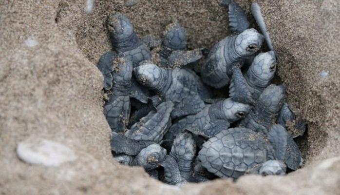 """Mavi'den """"İndigo Turtles""""  Projesi"""