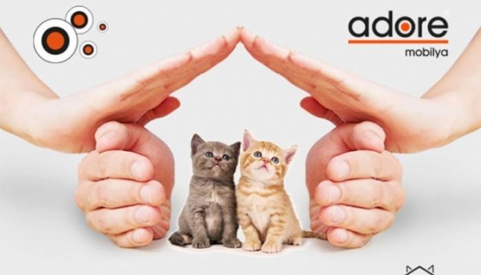 Adore Mobilya Kedi Evi Projesi Devam Ediyor