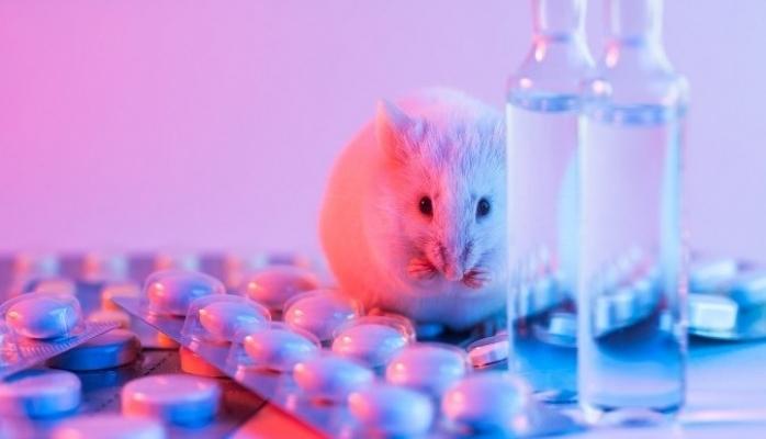 192 Milyondan Fazla Hayvan Deney İçin Laboratuvarlarda Tutuluyor