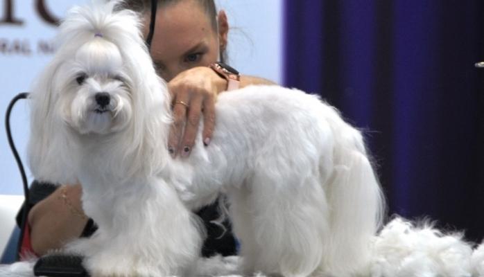 Evcil Hayvan Ürünleri Milyar Dolarlık Bir Sektör