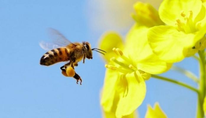 Arıların Hiç Bilmediğimiz Gizemli Dünyası